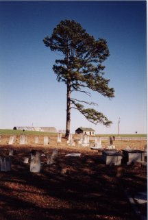 From the road, into the cemetery